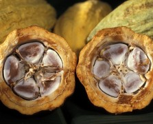 superfood cacao benefits