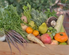 Modern Cornucopia: An Organic Thanksgiving Produce Box