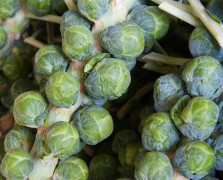 Chef Citrin's Roasted Brussels Sprouts Recipe