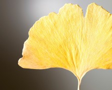 gingko-biloba superfood benefits