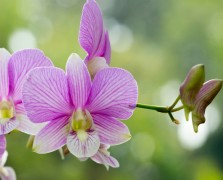 Superfood Spotlight: Dendrobium
