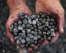 açaí berry superfood benefits