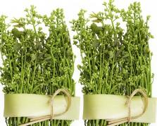 oral health neem plants