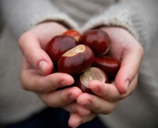 chestnut superfood benefits