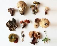 Get Wild: Mushroom Foraging 101