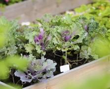 carrot salad gardening basics