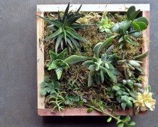 succulents succulent workshop
