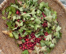 Superfood Spotlight: Hawthorn Berries