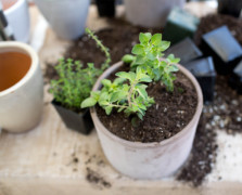 How To Build An Edible Garden + Indoor Herb Box At Home
