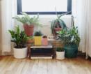 plant care