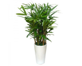 Let S Get Planty 9 Air Purifying Plants To Help You
